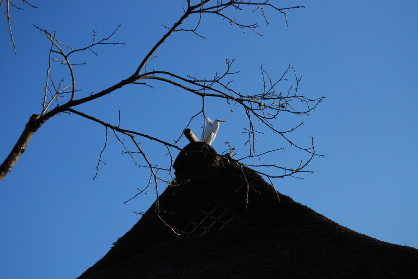 God's bird